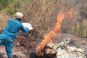 Lâm Đồng tiêu hủy số lợn chết bị vứt xuống suối, ngăn dịch bệnh