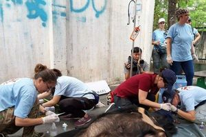 3 con gấu ngựa 20 tuổi nuôi nhốt tại Đồng Nai được 'giải cứu'