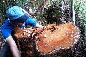Huế: Để 'lâm tặc' phá rừng phòng hộ, nhiều cán bộ bị kỷ luật