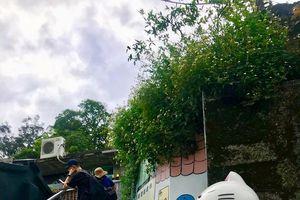 Đến Đài Loan, khám phá ngôi làng Houtong dành riêng cho hội yêu mèo