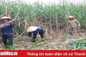 Sức lan tỏa từ việc học và làm theo Bác ở huyện Thạch Thành