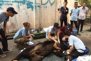 Bàn giao 3 cá thể gấu đen châu Á cho khu bảo tồn