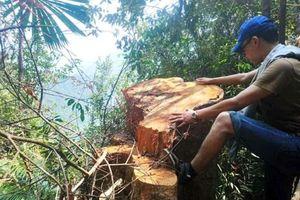 Huế: Kỉ luật 6 cán bộ để rừng đầu nguồn 'chảy máu'