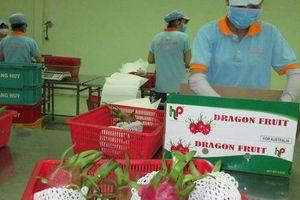 Xuất khẩu rau quả còn quá khiêm tốn