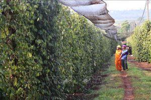 Không để thiếu điện phục vụ tưới tiêu mùa khô