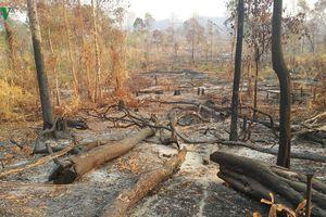 Gia Lai xác định có 2,7 ha rừng vành đai biên giới Ia O bị phá