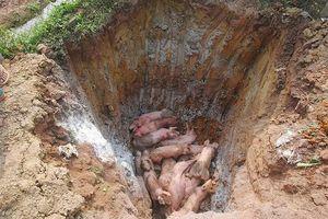 'Khóa chặt' quốc lộ 1 ngăn dịch tả lợn châu Phi lây lan
