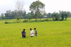 Phát triển HTX ở Đồng bằng sông Cửu Long: Chủ động liên kết, tạo đầu ra ổn định