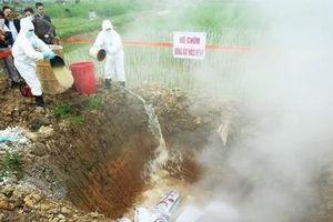 Xuất hiện bệnh dịch tả lợn châu Phi tại Nghệ An