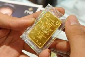Giá vàng miếng cao nhất 2 tuần, USD tự do chững
