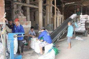Giá lúa tăng, nông dân phấn khởi