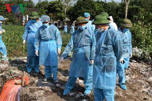 Quảng Ninh tiếp tục tiêu hủy đàn lợn mắc bệnh tả lợn châu Phi
