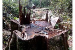 Bắt năm đối tượng khai thác gỗ rừng trái phép