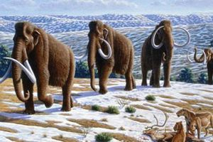 Bước tiến mới kinh ngạc trong việc hồi sinh voi ma mút