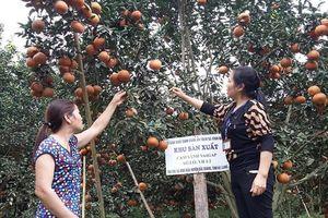 Phát triển nông nghiệp an toàn: Cách làm của Hà Giang