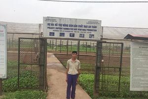 Cả xã sản xuất rau VietGAP