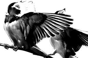 Truyện ngắn: Nhạc chim