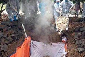 Phòng chống dịch tả lợn châu Phi: Hạn chế ra vào các trang trại lớn