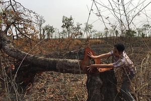 Vào điểm nóng phá rừng ở vùng biên giới Đác Lắc