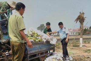 Tiêu hủy hơn 6,6 tấn xoài nhập lậu từ Campuchia