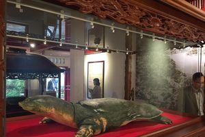 Mẫu vật cụ rùa Hồ Gươm giữ nguyên được thần thái khi còn sống