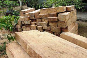 Bắt gần 50 phách gỗ lậu trên đường đi tiêu thụ