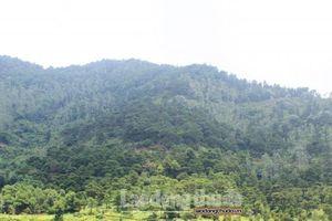 Hà Nội triển khai hiệu quả công tác bảo vệ và phát triển rừng