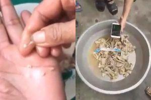 Kết quả kiểm nghiệm mẫu 'thịt gà nát' tại trường mầm non ở Bắc Ninh