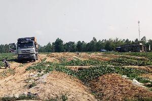 Chủ cho vay nặng lãi 'vây' ruộng dưa của nông dân Bình Định để đòi nợ
