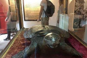 Sẽ phục chế tiêu bản cụ rùa Hồ Gươm mất năm 1967?