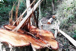 Khởi tố vụ phá gần 5 ha rừng phòng hộ tại xã biên giới