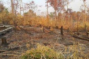 Gia Lai: Khởi tố vụ phá rừng phòng hộ Ia G'rai