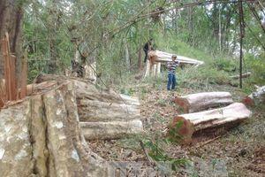 Khởi tố vụ án hủy hoại gần 5 ha rừng tại huyện Ia Grai, Gia Lai