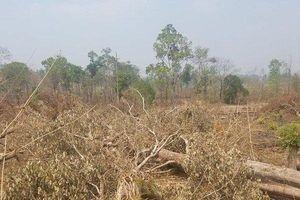 Khởi tố vụ phá hơn 4,9ha rừng tại xã Ia Chía