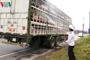 Mức tiêu thụ thịt lợn giảm mạnh tại Quảng Trị do e ngại dịch tả lợn