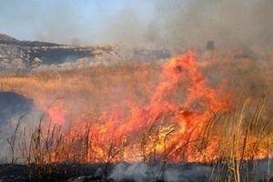 Cụ bà chết cháy sau khi đốt cỏ