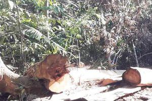 Gia Lai: Bắt tạm giam 5 đối tượng khai thác gỗ trái phép