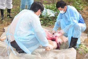 Thừa Thiên - Huế: Tập trung ngăn chặn dịch tả lợn châu Phi