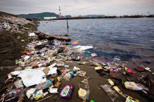 Động vật biển chết hàng loạt do nuốt phải rác thải nhựa