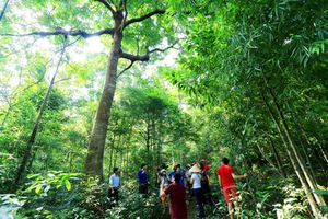 'Lá phổi xanh' rừng Hoành Bồ