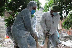 Quảng Ninh tăng cường phòng chống dịch tả lợn châu Phi