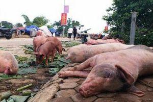 Giá lợn giảm, người chăn nuôi lao đaoBài 4: 'Cảng bình yên' nào cho người chăn nuôi?
