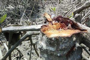 Đồng Nai: Rừng phòng hộ bị chặt phá vô tôi vạ