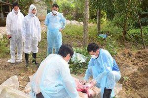 FAO chỉ lí do lan rộng dịch tả lợn ở những hộ nuôi quy mô nhỏ