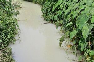 Người dân hoang mang vì hàng nghìn m3 nước thải bốc mùi thuốc sâu chảy ra sông