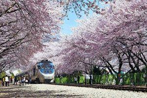 Có 15 triệu đồng đi du lịch Hàn Quốc liệu có đủ không?