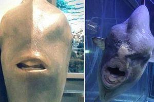 Gương mặt dị của 'thủy quái' hiền lành dưới góc nhìn 'độc'