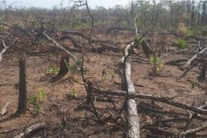 Khởi tố vụ phá rừng ở xã biên giới