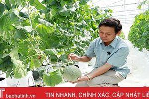 Hà Tĩnh phấn đấu đến 2025, giá trị trên đơn vị diện tích đạt 130 triệu đồng/ha