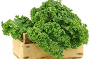 Điểm danh các loại rau cải giàu vitamin E tốt cho cơ thể